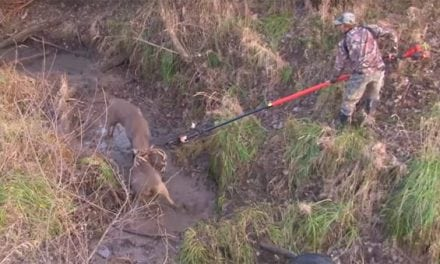 A Tense Big Buck Breakup with a Chain Pole Saw