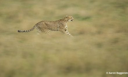 Creative Blurs For Wildlife Photos