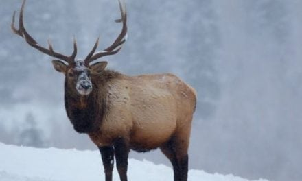 Deer and Elk Hit Hard in Several States This Winter