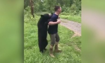 Does Watching This Bear Cub Mingle With Campers Make You Nervous?
