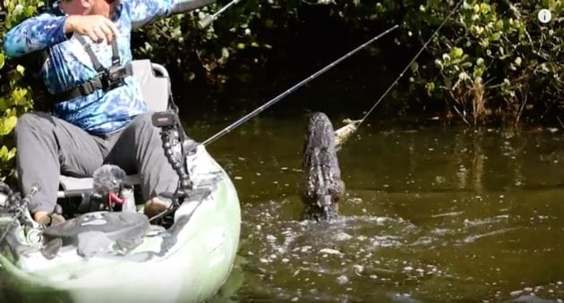Feel the Intensity as Alligators Surround a Small Fishing Kayak