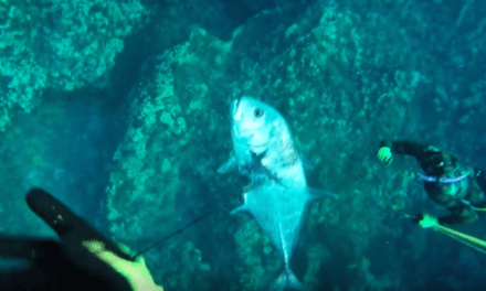 Here's Some Epic Footage of What it's Like to Go Spearfishing in Hawaii