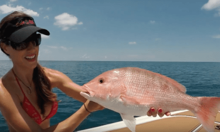 Hooking Huge Red Snapper in Florida Like a Boss