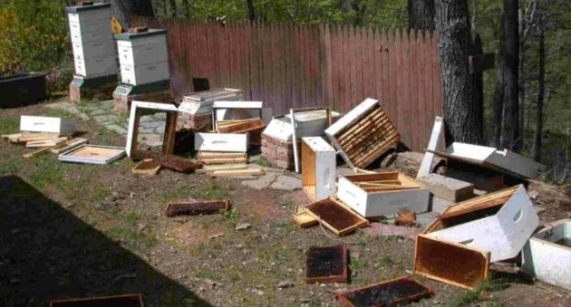 Michigan Bears Are Causing Big Problems for Beekeepers