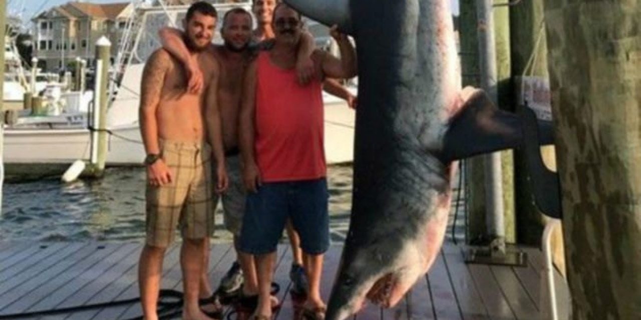 Monster Mako Shark Won't Make Record Book Because of Technicality