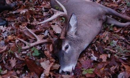 Pennsylvania Confirms Wild, CWD-Positive Buck Discovered in Clearfield County
