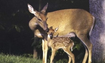 Should You Shoot a Doe with Fawns?