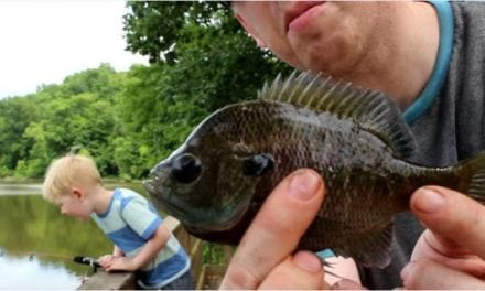 The Often Under-Appreciated Bluegill Catch and Cook