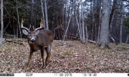 These 10 Trail Cam Vids Will Get You Pumped for Deer Season