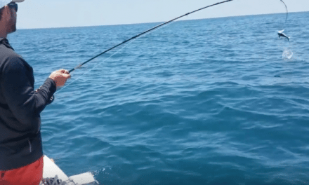 This Baby Mako Gets Some Air While Hooked on the Fly