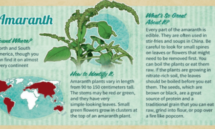 This Infographic Highlights a Few Wild Edibles, but Don't Rely on it for Foraging