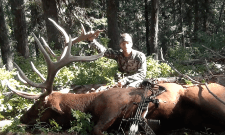 This Solo Archery Elk Hunt is What Dreams Are Made Of