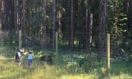 Tourists in Canada Walk Right up to Grizzly Bear to Get Pictures