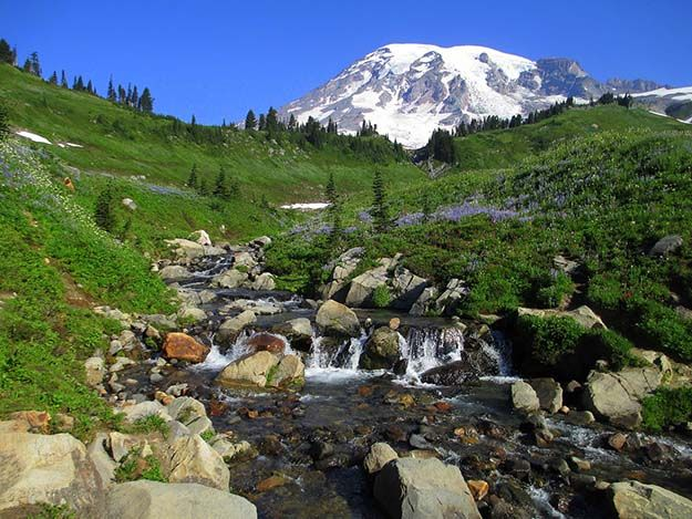 Camping in Washington   Ultimate List of Campgrounds Around US   Survival Life Camping Spots List