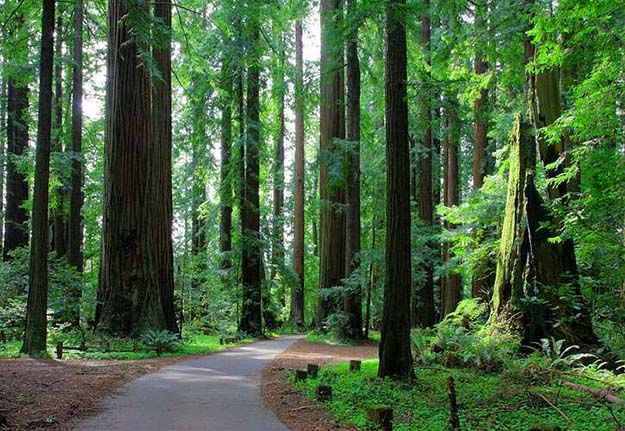 Camping in California   Ultimate List of Campgrounds Around US   Survival Life Camping Spots List