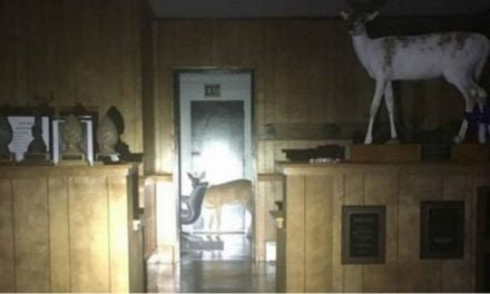 Wayward Deer Crashes into a NC Building… It's a Taxidermy Shop!