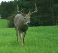 Whitetail Wisdom: CWD, Monkeys & Eating Venison