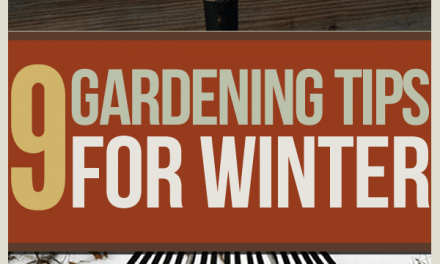 Winter Gardening Tips: The Prepper's Guide to Cold-Weather Gardening