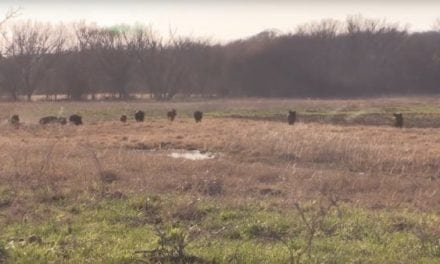 You Won't Believe What Happens After These Hunters Turn on Their Hog Call