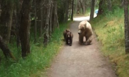 1 Man, 3 Bears, and 2 Minutes of Terrifyingly Tense Footage