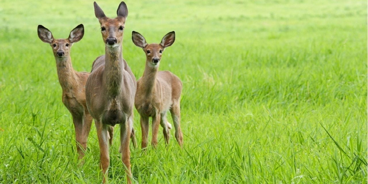 10 Whitetail Deer Facts Most Hunters Don't Know ⋆ Outdoor ...