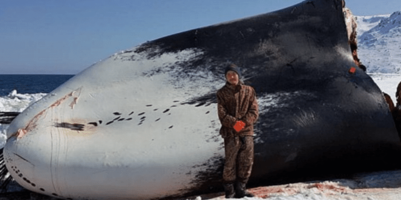 Alaskan Boy Harassed by Loony Animal Rights Activists for Killing a Whale to Feed His Village