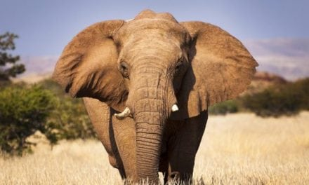 Argentine Hunter Killed by Elephant in Namibia