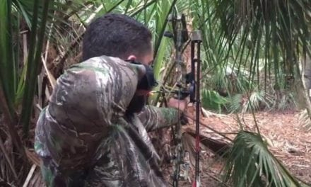 Could You Hit a Wild Hog Through the Palmettos Like This?