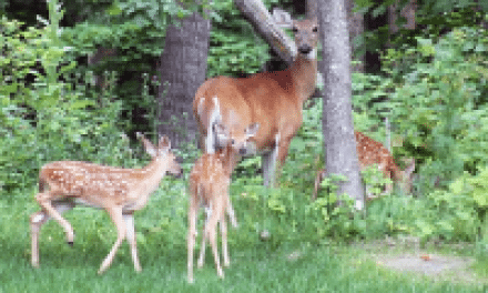 Create the Nastiest, Most Beneficial Bedding Areas for Deer Hunting