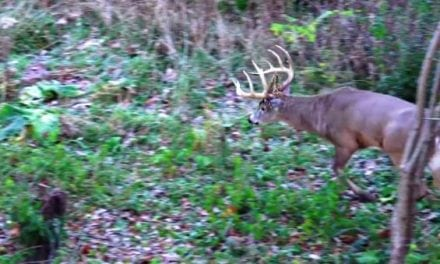 Did This Guy Really Just Do That, and is He Insane for Passing This Buck?