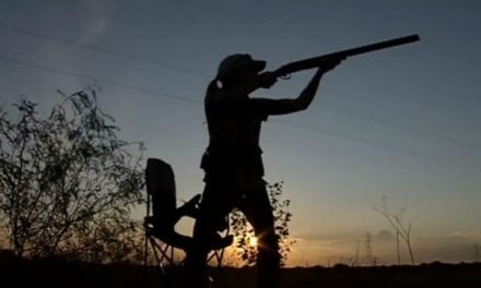 Early Signs Point to an Awesome Dove Season in Texas This Year