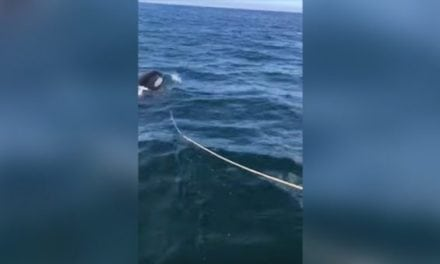 Father and Son's Salmon Fishing Boat Attacked by Orca (Warning: Explicit Language)