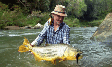 Golden Dorado on the Fly Are a Flat Out Rush