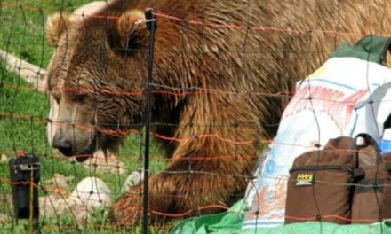 How to Install an Electric Bear Fence (It's Shockingly Easy!)