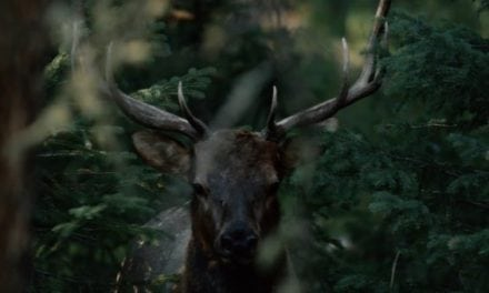 If You Love Elk Hunting, You Need to See Corey Jacobsen's New Video: The Linguists