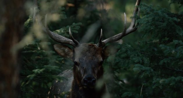If You Love Elk Hunting, You Need To See Corey Jacobsen's New Video- The Linguists