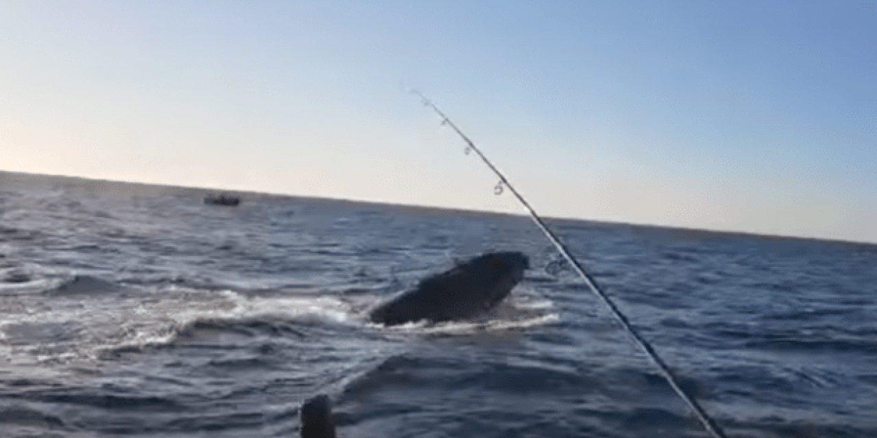 Kid and Dad Hook a Humpback Whale in the Video of a Lifetime