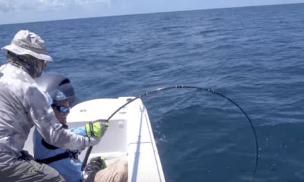 Let's See if You Can Actually Catch a Goliath Grouper on the Fly