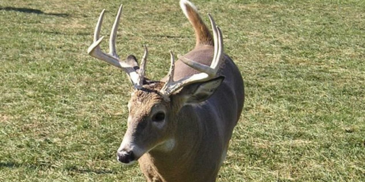 Michigan Introduces More Carcass Importation Rules in Fight Against CWD