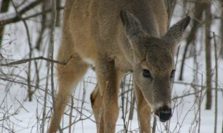 New York DEC Announces New Plan to Control CWD, Including a Ban on Deer Urine