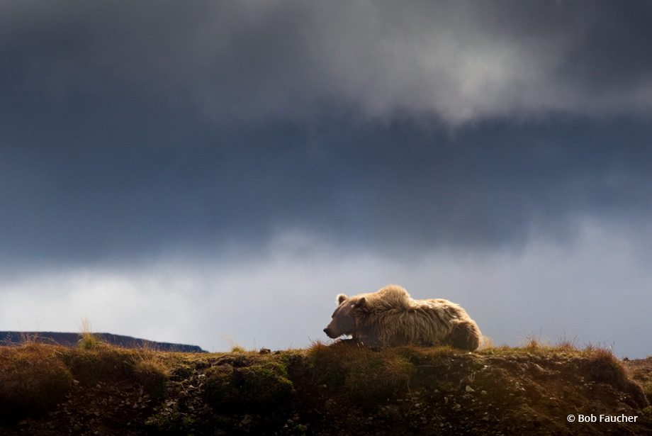 """Today's Photo Of The Day is """"Watchful Mom"""" by Bob Faucher. Location: Alaska."""