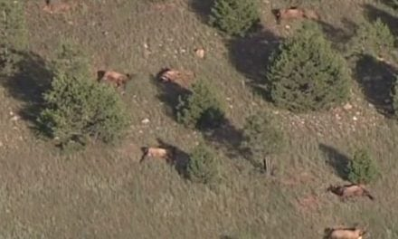 Remember When Nearly 100 New Mexico Elk Were Found Dead Days Before The Opener?