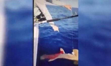 Shark Shooting Video Sparks Outrage, FWC Investigating