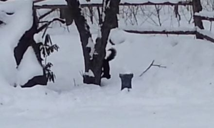 This Squirrel Ate Too Many Crabapples and is Now Hilariously Drunk