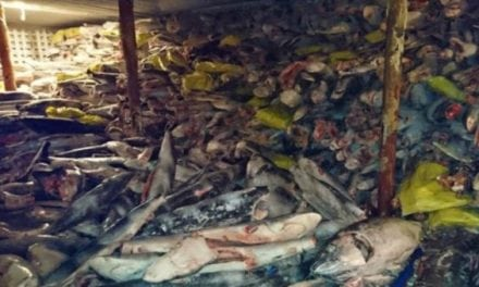Thousands of Sharks Found on a Boat in Illegal Operation