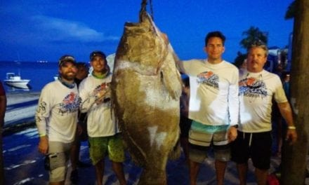 Video: Could This 409-Pound Warsaw Grouper be the New World Record?