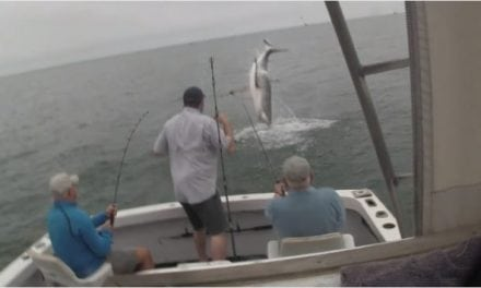 Watch This Shark Spectacularly Breach to Steal a Striper Off a Fisherman's Hook