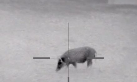 Yep: Keith Warren Put a Thermal Scope on His Dragon Claw Air Rifle and Killed a Hog With It