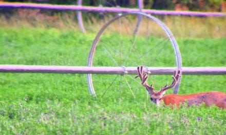 10 Velvet Bucks to Get You in Gear for Deer Season