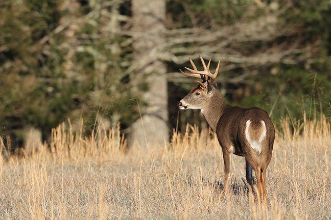 2017 Virginia Deer Forecast Feature